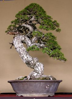 Indonesian Bonsai - Page 2