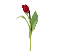 6 Pretty Flowers and Their Symbolic Meanings — Red Tulip (symbolism: declaration of love) (Real Simple; photo credit: Siede Preis/Getty Images)