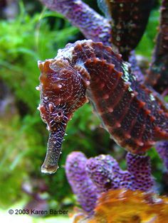 seahorse2.png