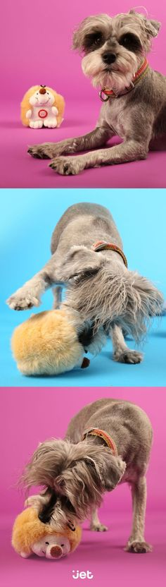 Every dog needs a favorite squeeky toy :)