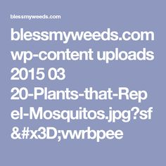 blessmyweeds.com wp-content uploads 2015 03 20-Plants-that-Repel-Mosquitos.jpg?sf=vwrbpee