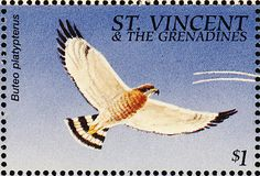 Broad-winged Hawk stamps - mainly images - gallery format
