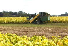 Tobacco harvester