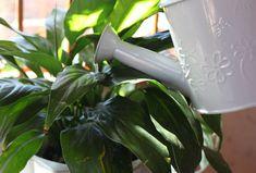 Come pulire l'aria viziata dentro casa utilizzando piante d'appartamento capaci di depurare gli ambienti grazie alle loro proprietà purificatrici.