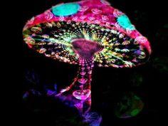 Infected Mushroom- Sleeping [May Be] [Unreleased Track] Infected Mushroom, Acid Trip, Twitter Backgrounds, Psy Art, Mushroom Art, Mushroom Drawing, Psychedelic Art, Artsy Fartsy, Art Photography