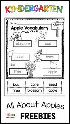 KINDERGARTEN APPLE LESSONS - all about apples - back to school - august