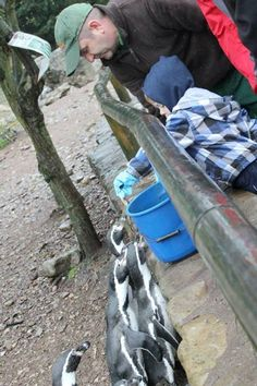 Warden Experiences at Fota Wildlife Park, Co Cork. Spend time experiencing life as a warden or get up close with some amazing animals at Fota Wildlife Park.