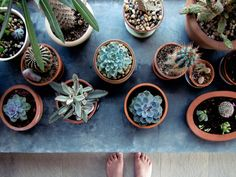 When I get a house I way succulents everywhere! This picture is so cute for when I can do that!