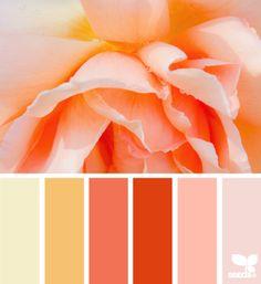 petalled hues - design seeds