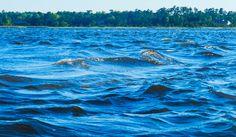 Choppy White Oak River