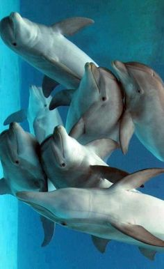 Playful Dolphins ❤