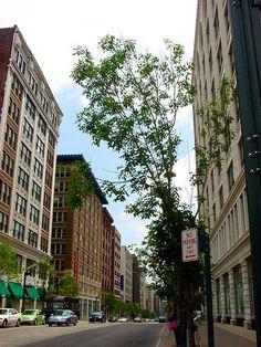St. Louis, MO : Washington Loft District 1