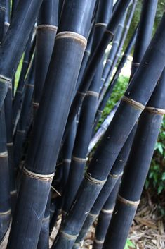 Natural Bamboo Fence Ideas for Your Garden. Not only an iron fence, concrete, or wood. Now natural bamboo fence is also a favorite of many, ranging from rural people to people who live in the ci. Bamboo Tree, Bamboo Fence, Giant Bamboo, Tropical Garden, Tropical Plants, Bamboo Species, Clumping Bamboo, Bamboo Construction, Gardens