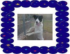 KELLYVILLE, OK - Border Collie/Australian Shepherd Mix. Meet KATY, a dog for adoption. http://www.adoptapet.com/pet/16976095-kellyville-oklahoma-border-collie-mix