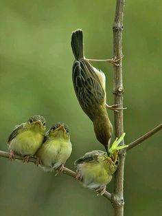 Bird feeding the babies. Beautiful photo
