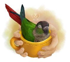Need a gift for a bird lover? Try this high quality art print of a cute Green Cheek Conure (also known as a Green Cheek Parakeet) sitting in a tea