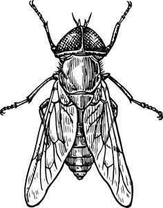 Gadfly Insect Clip Art Vector