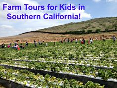Farm Tours for Kids all over Southern California from Los Angeles to San Diego!  Some are free, some cost a few bucks.  Either way...they are a great learning experience for children.