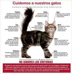 Cuido de gatos