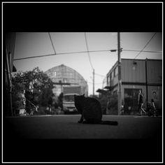 cat  Setagaya