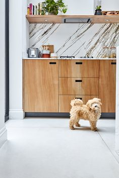 ESSENTIAL KITCHENS & PLUCK LONDON -  Creative Director Amy Powney's adorable cockapoo Roxy enjoys the new kitchen. #motherofpearl #pearlyqueen #roxythedog #interiors #kitchens New Kitchen, Kitchen Dining, Dining Room, Victorian Townhouse, London House, Cockapoo, Future Goals, Contemporary Fashion, Creative Director