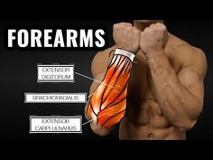 The Best Science-Based Forearm Workout for Size and Strength - YouTube