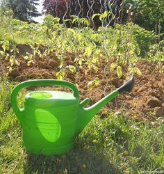 Arrosoir pour bien arroser les plants de tomates