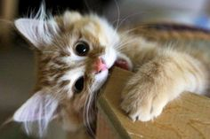 I think this cheeky kitten has lots of fun !