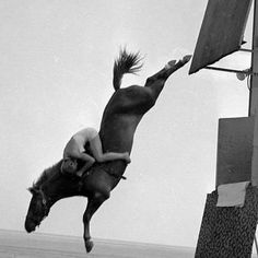 Horse Diving 1955