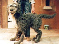 """Craig Denston – James the Dog from """"The Railway Children"""" 2002"""
