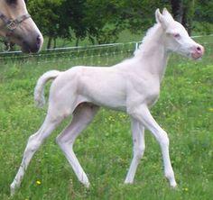 Poulains 2013 - Elevage chiens et chevaux - Domaine de Mayao et Color Dream
