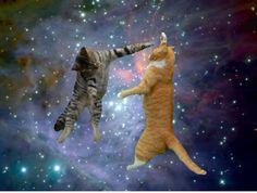 Anti Gravity Dance Cats