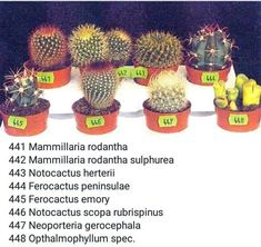 Amazing Unusual Plants To Grow In Your Garden Types Of Succulents, Cacti And Succulents, Planting Succulents, Mini Cactus Garden, Succulent Gardening, Unusual Plants, Exotic Plants, Cactus Types Names, Cactus Identification