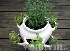 You Grow Girl's strawberry pot of herbs. Photo by Gayla Trail All Rights Reserved Strawberry Planters, Strawberry Garden, Herb Garden Design, Garden Pots, Garden Ideas, Types Of Herbs, Succulent Centerpieces, Ceramic Pots, Large Plants