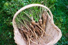 Bohatá úroda kvalitného petržlenu: Takto sa z nej budete tešiť aj vy Wicker Baskets, Plant Hanger, Ale, Macrame, Plants, Outdoor, Decor, Nova, Lawn And Garden