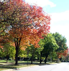 Fall colors along Old Green Bay road parkway in Glencoe