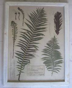 /\ /\ . fern botanical