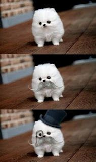 The cutest dog ever :)