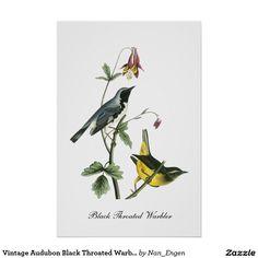 Toutinegras Throated pretas de Audubon do vintage Poster