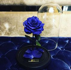 Blue Rose Bouquet, Blue Roses, Blue Flowers, Ecuadorian Roses, Wallpaper Backgrounds, Wallpapers, Everything Is Blue, Blue Weddings, Blue Art