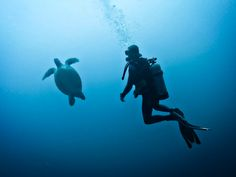 In many ways, Koh Tao and Gili Trawangan are sister islands in Southeast Asia. Both are small tropical diving meccas, filled with backpackers in search of scuba certifications. I wrote a Guide to Diving in Koh Tao a few years ago, and judging by the number of aquatic-related questions I've received since first landing in Indonesia, …