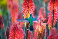 #Hummingbird. #Quito #Ecuador #Andes #Colorful #Beautiful #Nature