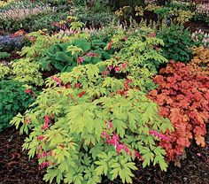 Includes one each of Dentra spectabilis 'Gold Heart', Heuchera 'Caramel' (PP 16,560), Heuchera 'Peach Flambe' (PP 17,195), Hosta 'Queen of Seas', Pulmonaria 'Moonshine' (PP 13,686), and Tiarella 'Sugar and Spice' (PP 16,738). Six plants total. Covers approx. 23sq ft.