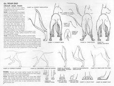 Great Dane Standard Animal Medicine, Medicine Book, Great Dane Facts, Pets, Illustration, Animals, Scooby Doo, Future, Dog