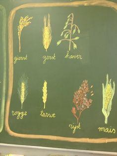 Grains - chalkboard