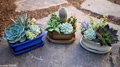 Succulents in Bonsai Pots!