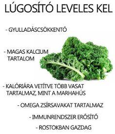 Életmód cikkek : Zöldség és gyümölcsök hatásai Herb Garden, Vitamins, Spices, Health Fitness, Food And Drink, Healthy Eating, Herbs, Arthritis, Gardening
