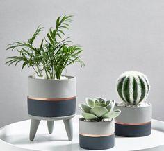 Cement Art, Concrete Crafts, Painted Plant Pots, Fleurs Diy, Decoration Plante, Concrete Pots, House Plants Decor, Colorful Plants, Deco Floral
