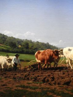 Artists, Photo And Video, Artwork, Painting, Collection, Women, Art Projects, Souvenirs, Cow