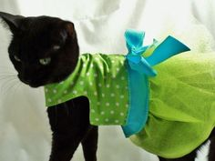 Whether it's a sharp sweater, a warm jacket, or yes, an adorable turtle costume, the majority of pet parents have played dress up with their four-legged friends.